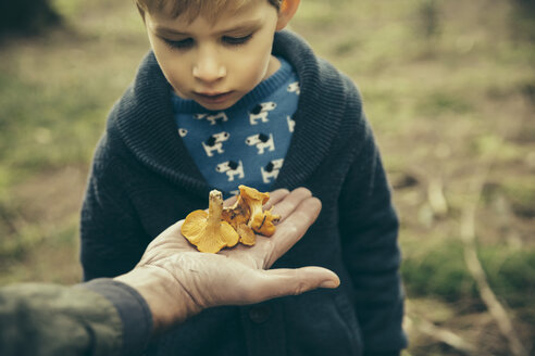 Little boy looking at chanterelle mushrooms in man's hand - MFF002430