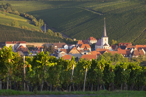 Germany, Lower Franconia, Escherndorf surrounded by vinyards - SIEF006809