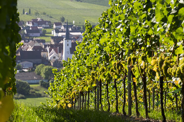 Germany, Lower Franconia, Escherndorf surrounded by vinyards - SIEF006812