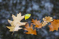 Autumn leaves in a puddle - JTF000709