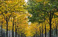 Germany, Saxony, avenue in autumn - JTF000712
