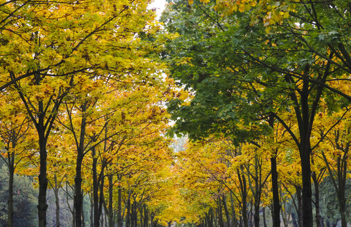 Germany, Saxony, avenue in autumn - JTF000712