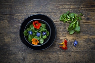Bowl of lamb's lettuce with blossoms of borage and Indian cress - LVF004057