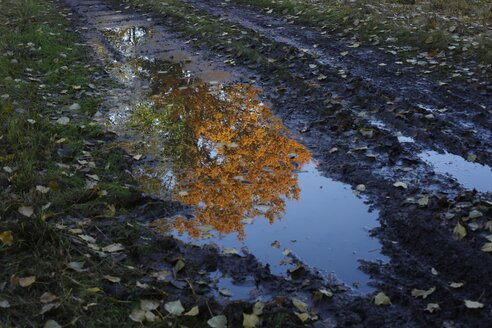 Germany, tree in autumnal colours reflecting in a puddle - JTF000713