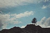 Italy, Valmalenco, single tree on ridge - DWIF000631