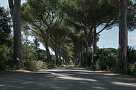Italy, Tuscany, Maremma, pine-lined road - RIBF000352