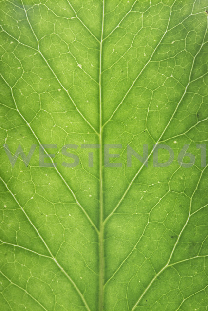Green leaf, close up - ERLF000074 - Enrique Ramos/Westend61