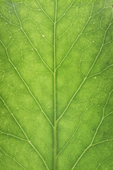 Green leaf, close up - ERLF000074