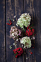 Blossoms of Hydrangea and firethorn on dark wood - CSF026585