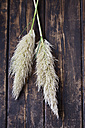 Two inflorescences of Pampas Grass on dark wood - CSF026588