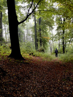 Germany, Saxony-Anhalt, Man walking alone in autumnal forest - HCF000151