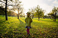 Germany, Baden-Wuerttemberg, back view of little girl standing on a meadow at evening twilight - LVF004115