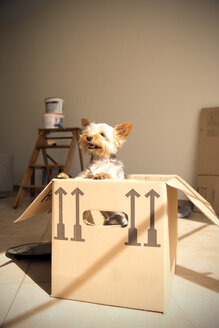 Dog inside cardboard box - TOYF001421