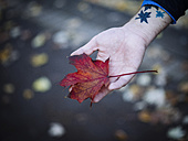 Hand of man holding autumnal maple leaf - DASF000020