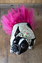 Portrait of French Bulldog dressed up as princess - KIJF000018