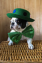 Portrait of French Bulldog dressed up with green hat and bow tie - KIJF000021