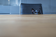 Black cat sitting on a chair hiding behind tabletop - FRF000356