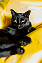 Portrait of black cat relaxing - SARF002309
