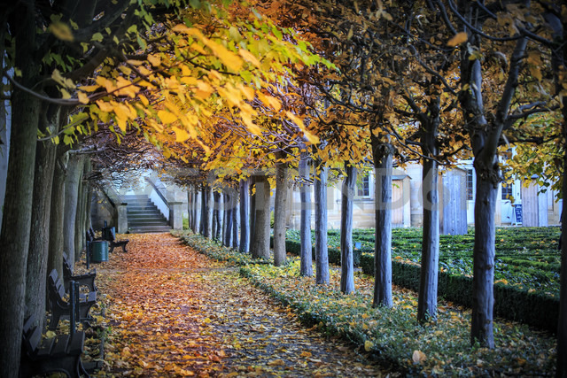 Germany, Bamberg, view to autumnal walkway - VT000473 - Val Thoermer/Westend61