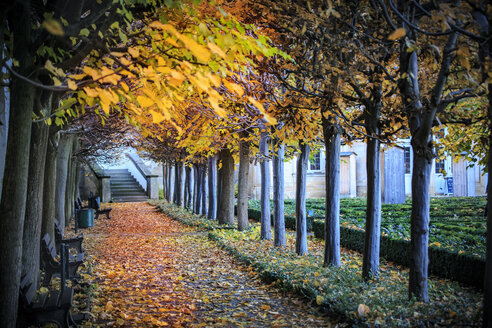 Germany, Bamberg, view to autumnal walkway - VT000473