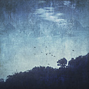 Flying birds, trees in the evening, textured effect - DWIF000642