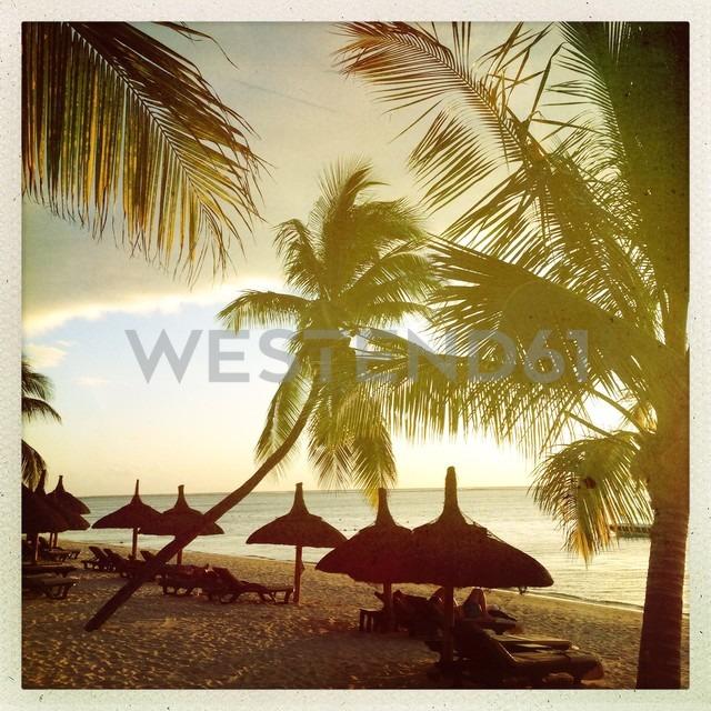 Mauritius, palm beach - JUN000453