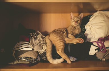 Tabby cat lying on clothing inside a closet at home - RAEF000673