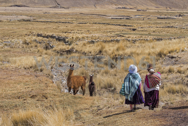 Bolivia, La Paz district, Altiplano, Two aymara women walking trough the Bolivian Plateau with two llamas - LOMF000093 - Lorenzo Mattei/Westend61