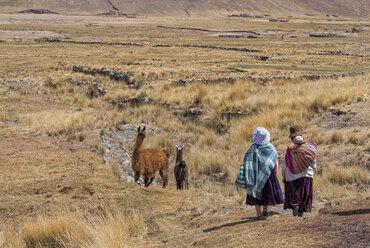 Bolivia, La Paz district, Altiplano, Two aymara women walking trough the Bolivian Plateau with two llamas - LOMF000093