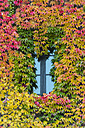 Germany, Bavaria, Munich, leaves around a window in autumn - LOMF000100