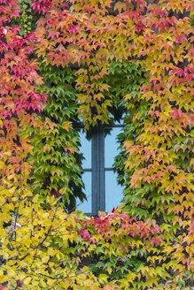 Germany, Bavaria, Munich, leaves around a window in autumn - LOMF000100