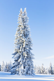 Germany, Bavaria, Bohemian Forest in winter - FOF008360