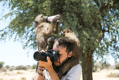 Namibia, photographer taking pictures with three baby baboons on his shoulders - GEMF000499