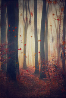Falling leaves in autumnal forest - DWI000654
