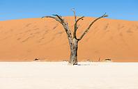 Namibia, Namib Desert, dead tree in Deadvlei - GEMF000511