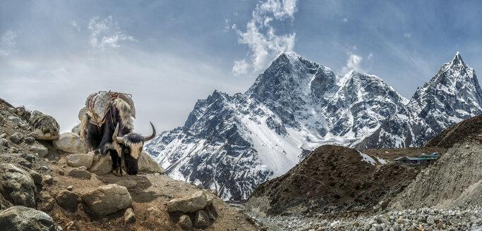 Nepal, Himalayas, Khumbu, Everest Region, Taboche, Yak standing on rock - ALRF000196