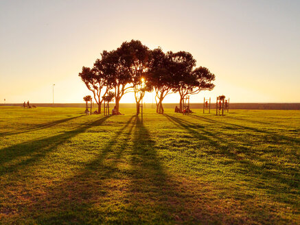 tree in a park at sunset, South Africa, Cape Town - BMA000078