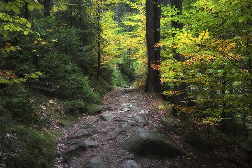 Poland, Sudetes, Karkonosze Mountains, Karkonoski National Park, mountain path in autumn forest - ABOF000056