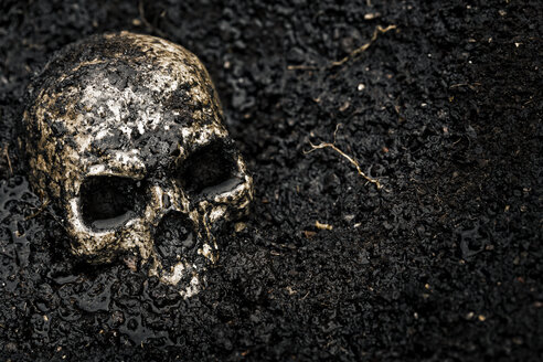 Skull in wet soil - MIDF000702