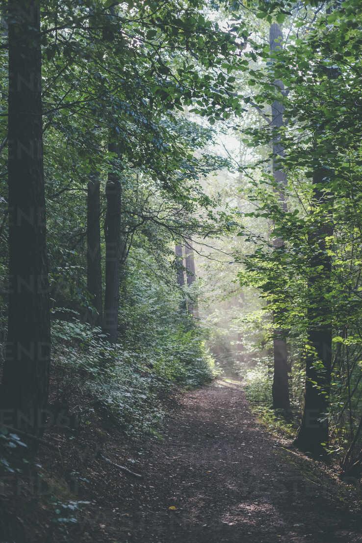 Germany, Saxony, trail in forest - MJF001684 - Jana Mänz/Westend61
