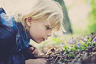 Germany, Saxony, boy scrutinizing plants on the ground - MJF001699