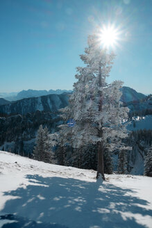 Germany, Bavaria, Chiemgau, Kampenwand, tree in winter landscape in backlight - HAMF000114
