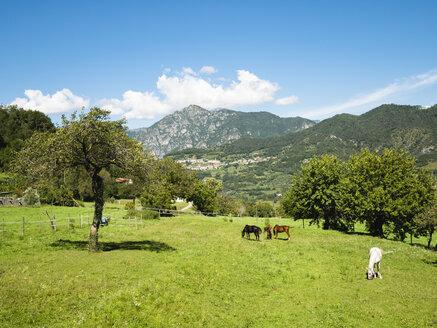 Italy, Prabione di Tignale, Horses grazing in corral - GSF001053