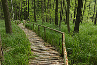 Boarded footpath in national park Gliensee - LBF001316
