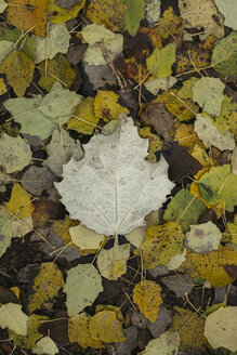 Autumn leaves on the forest soil - JPF000083