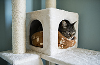 Tabby cat poking his head into his lair at home - RAEF000752
