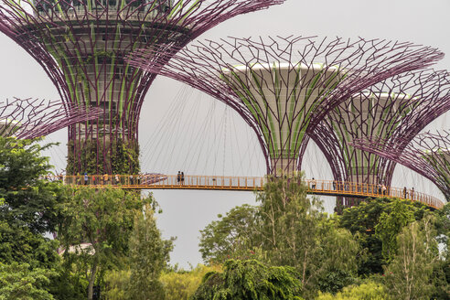 Singapore, Gardens by the Bay, Supertree Grove, Supertrees - PC000213