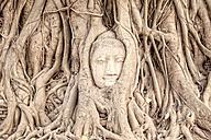 Thailand, Ayutthaya, Buddha head in between tree roots at Wat Mahathat - DR001678