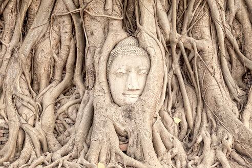 Thailand, Ayutthaya, Buddha head in between tree roots at Wat Mahathat - DR001678