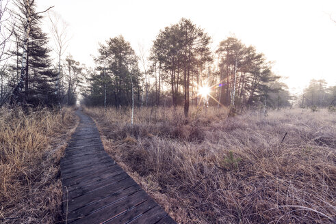 Austria, Ibm, Ibmer Moor, wooden boardwalk at sunrise - OPF000099